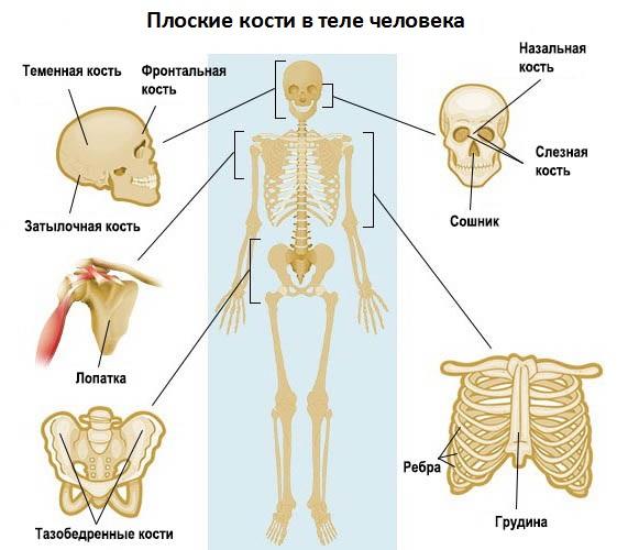 Как сделать тазобедренную кость уже